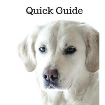 Puppy Training Quick Guide