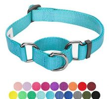 Blueberry Pet 19 Colors Safety Training Martingale Dog Collar Medium Turquoise Medium Heavy Duty Nylon Adjustable Collars for Dogs