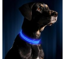 Illumiseen LED Dog Collar  USB Rechargeable  Available in 6 Colors & 6 Sizes  Makes Your Dog Visible Safe & Seen  Blue Medium