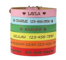 Custom Catch Personalized Dog Collar  Engraved Soft Leather in XS Small Medium or Large Size ID Collar No Pet Tags or Embroidered Names